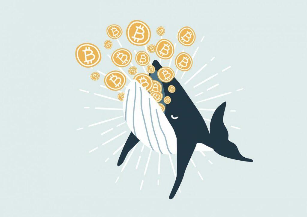 Wale bewegen 2,74 Milliarden US-Dollar in 14 Minuten